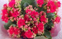 Kaktusz. Fotó: Csonki