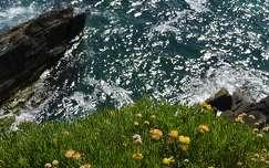 vadvirág tengerpart írország