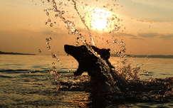naplemente kutya v�zcsepp balaton t� magyarorsz�g