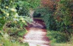 szarvas és őz út