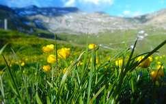 nyár hegy olaszország alpok vadvirág