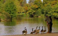 lúd ősz vizimadár