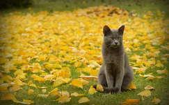 Cirkáló a levelek között elmélkedik :)