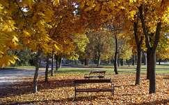 ősz, padok, park, Balatonalmádi, Magyarország