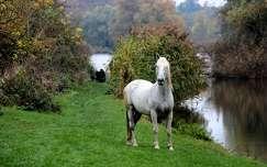 ősz lovak
