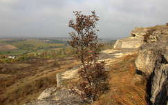 Nyakas-szikla környékén - Biatorbágy