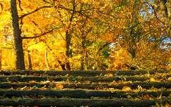 ősz fény lépcső