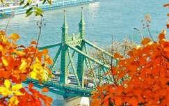 duna magyarország ősz szabadság híd híd budapest folyó