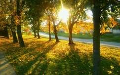 Őszi napsugarak.
