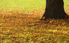 levél ősz