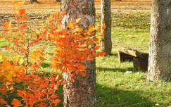 pad ősz