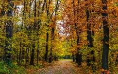 Őszi erdő (Gödöllő)