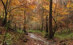 patak, ősz