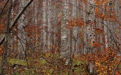 Őszülő erdő