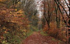 erdei sétány ősszel