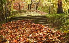 levél ősz lépcső