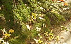 levél ősz moha
