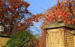 ősz színes