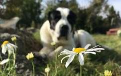 Kutya, virág