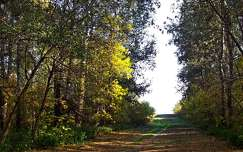 ősz, kocsiút, Magyarország