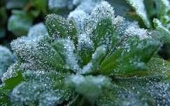 növény, jégkristály, magyarország