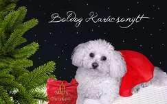 kutya karácsony