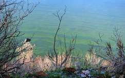 A Balaton medrének fodrozódása a Fonyódi Sétányról
