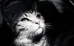 macska fekete-fehér
