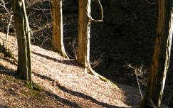 árnyék fény erdő