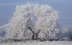 fa tél zúzmara