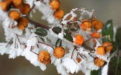 színes tél zúzmara
