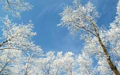fa zúzmara tél