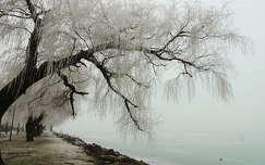 tél zúzmara fa tó