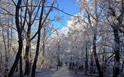 Normafa tél_1