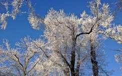 Normafa tél_2