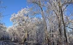 Normafa tél_4