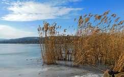 nád, jég, Balatonalmádi, magyarország