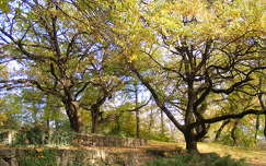 fa ősz