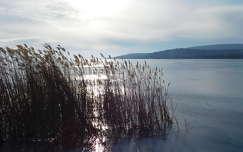 nád, jég, csillogás, Balatonalmádi, magyarország