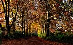 ősz út fasor