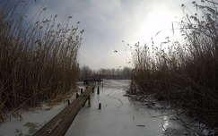 tél nád tó