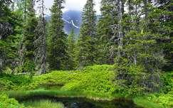 Raurisi őserdő