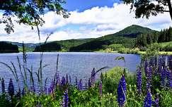 tavasz tavaszi virág csillagfürt tó vadvirág