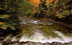 ősz erdő folyó