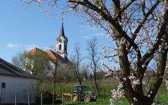 tavasz virágzó fa templom