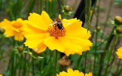 virág, méh