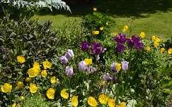 tavaszi virág kertek és parkok tulipán