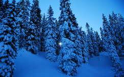 Tél, hó, fenyő, hegy