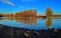 folyó fa tükröződés