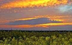 repceföld tavasz naplemente felhő repce